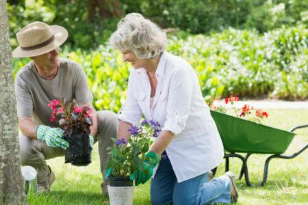 Health Benefits of Gardening for Seniors Morristown